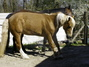 Barhufteam - Station für hufkranke Pferde