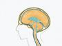 Bild Craniosacrales System