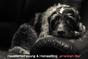 "Hunde/Tier/Hausbetreuung ""american like"", ganze Schweiz"