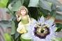 Blumen Lotus